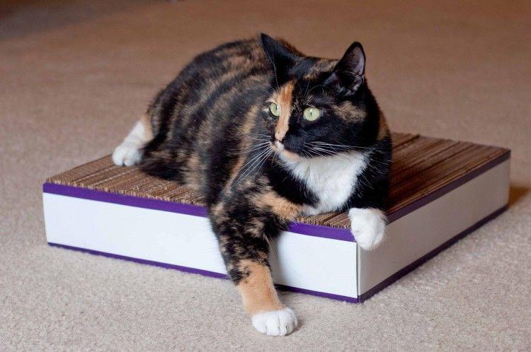 cómo hacer un rascador de gatos de cartón