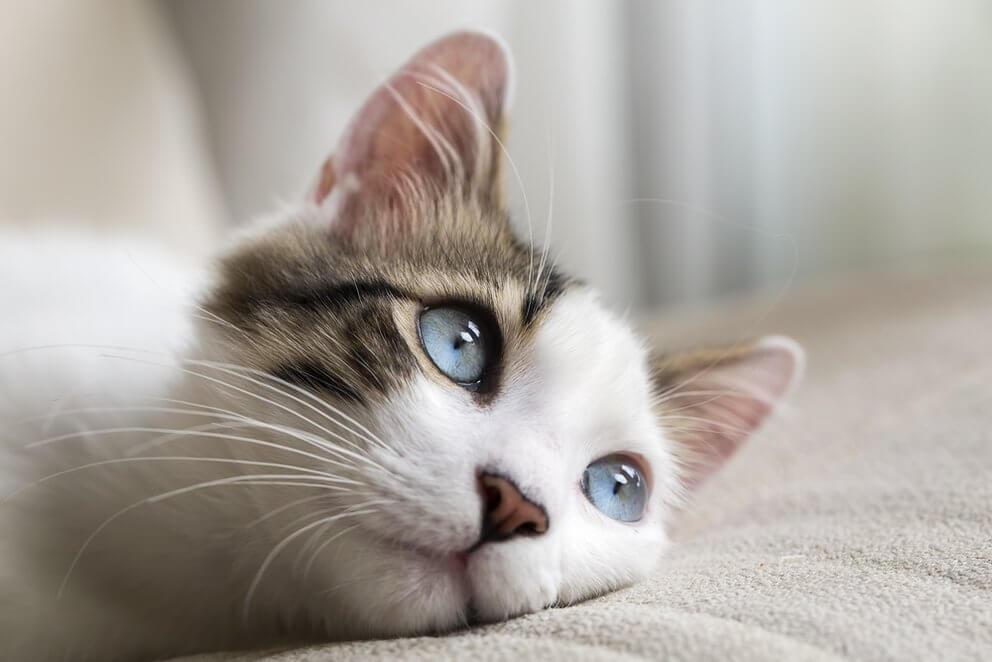 gato no rasca en el rascador