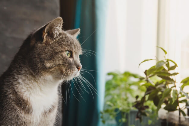 hamacas para gatos en ventana